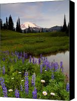 Mt. Rainier Canvas Prints - Lupine Sunrise Canvas Print by Mike  Dawson