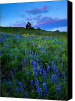 Hillside Canvas Prints - Lupine Sunset Canvas Print by Mike  Dawson