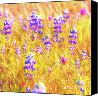 Bluebonnets Canvas Prints - Lupines and Mixed Wildflowers Canvas Print by Gus McCrea