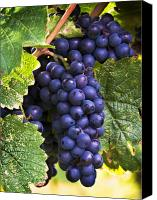 Blue Grapes Canvas Prints - Luscious Grape Cluster Canvas Print by Marion McCristall