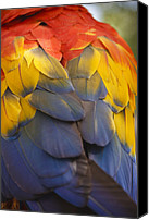 Parrot Canvas Prints - Macaw Parrot Plumes Canvas Print by Adam Romanowicz