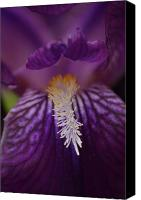 Jd Grimes Canvas Prints - Macro in Purple Canvas Print by JD Grimes