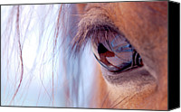 Body Canvas Prints - Macro Of Horse Eye Canvas Print by Anne Louise MacDonald of Hug a Horse Farm