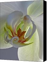 Luminous Canvas Prints - Macro Photograph of an Orchid  Canvas Print by Juergen Roth