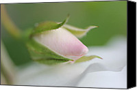Rose Bud Canvas Prints - Macro Pink Rosebud Flower Canvas Print by Jennie Marie Schell