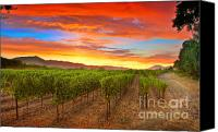 Vineyard  Canvas Prints - Magic Hour Canvas Print by Mars Lasar