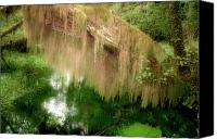 Jungle Canvas Prints - Magical Hall of Mosses - Hoh Rain Forest Olympic National Park WA USA Canvas Print by Christine Till
