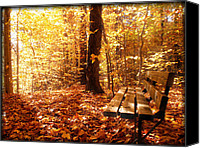Forest Floor Canvas Prints - Magical Sunbeams on the Best Seat in the Forest Canvas Print by Chantal PhotoPix