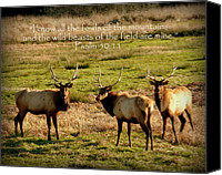 Bulls Photo Canvas Prints - Magnificent Bull Elk Psalm 50 Canvas Print by Cindy Wright