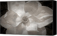 Magnolias Canvas Prints - Magnolia 3 Canvas Print by Rich Franco