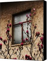 Magnolias Canvas Prints - Magnolias Before Window Canvas Print by Amy Neal