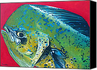 Jon Ferrentino Canvas Prints - Mahi Mahi Canvas Print by Jon Ferrentino