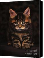 Young Pastels Canvas Prints - Maine Coon Kitty Canvas Print by Sabine Lackner