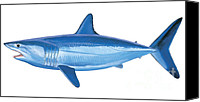 Guy Harvey Canvas Prints - Mako Shark Canvas Print by Carey Chen