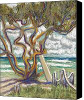 Scenic Pastels Canvas Prints - Malaekahana Tree Canvas Print by Patti Bruce - Printscapes