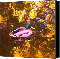 Rural Landscapes Digital Art Canvas Prints - Malard Duck on Pond 1 Canvas Print by Amy Vangsgard
