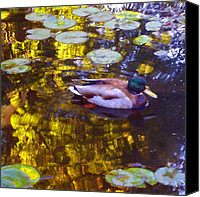 Rural Landscapes Digital Art Canvas Prints - Malard Duck on Pond 2 Canvas Print by Amy Vangsgard