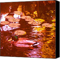 Rural Landscapes Digital Art Canvas Prints - Malard Duck on Pond 3 Square Canvas Print by Amy Vangsgard