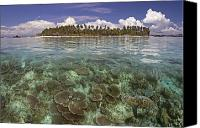 Dave Canvas Prints - Malaysia, Mabul Island Canvas Print by Dave Fleetham - Printscapes
