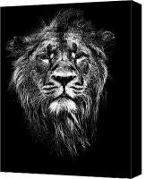 Lion Mixed Media Canvas Prints - Male Asiatic Lion Canvas Print by Meirion Matthias
