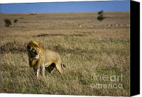 Kenya Canvas Prints - Male Lion in Serengeti Canvas Print by Darcy Michaelchuk