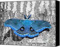 Selective Color Canvas Prints - Male Moth Light Blue Canvas Print by Al Powell Photography USA