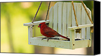 Red Cardinal Canvas Prints - Male Northern Cardinal on Feeder Canvas Print by Bill Tiepelman