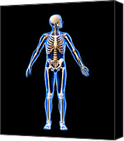 Dexterity Canvas Prints - Male Skeleton, Artwork Canvas Print by Roger Harris