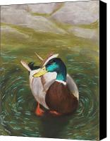 Pond Pastels Canvas Prints - Mallard Canvas Print by Anastasiya Malakhova