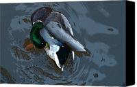 Art Appraisal Canvas Prints - Mallard  Canvas Print by Don  Wright