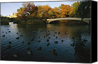 Photograhy Canvas Prints - Mallard Ducks Gather At Dusk Canvas Print by Melissa Farlow