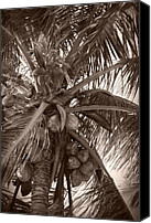 Monocromatico Canvas Prints - Malu Ke Ala Niu Canvas Print by Sharon Mau
