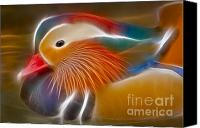 Colorful Feathers Photo Canvas Prints - Mandarin Glow Canvas Print by Susan Candelario