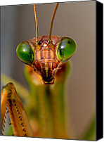 Predatory Canvas Prints - Mantis Eyes Canvas Print by William Jobes