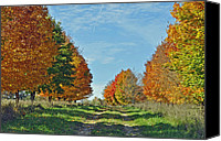 Metamora Canvas Prints - Maple Tree Lane Canvas Print by Rodney Campbell