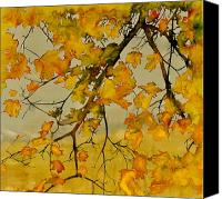 Dyes Tapestries - Textiles Canvas Prints - Maples In Autumn Canvas Print by Carolyn Doe