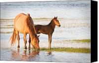 Rachel Carson Canvas Prints - Mare and Foal Canvas Print by Bob Decker
