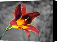 Day Lily Flowers Canvas Prints - Margos Lily Canvas Print by Jai Johnson