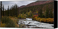 Wiseman Alaska Canvas Prints - Marion Creek Fall Color 2 Canvas Print by Gary Rose