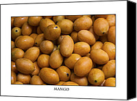 Mangoes Canvas Prints - Market Mangoes against white background Canvas Print by Zoe Ferrie