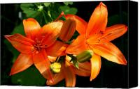 Floral Canvas Prints - Marmalade Lilies Canvas Print by David Dunham