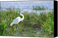 Great Egret Canvas Prints - Marsh Egret Canvas Print by Betty LaRue