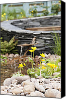 Pebbles Photo Canvas Prints - Marsh Marigolds Canvas Print by Anne Gilbert