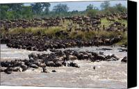 Wildlife Pyrography Canvas Prints - Masai Mara the great migration Canvas Print by Paco Feria