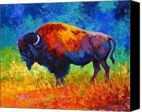 Bison Canvas Prints - Master Of His World Canvas Print by Marion Rose
