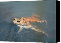 Bullfrogs Canvas Prints - Mating Frogs Canvas Print by Leonora Bridges