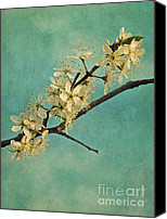 Mint Canvas Prints - Mayblossom Canvas Print by Priska Wettstein