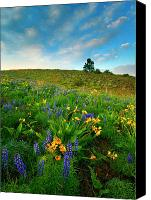 Lupine Canvas Prints - Meadow Gold Canvas Print by Mike  Dawson
