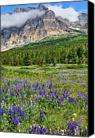 Montana Canvas Prints - Meadow With Lupines Canvas Print by Merilee Phillips