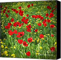 Dandelions Canvas Prints - Meadow with tulips Canvas Print by Elena Elisseeva